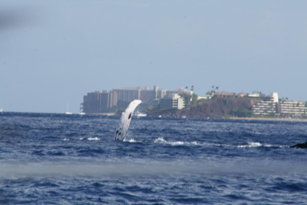 waving_whale