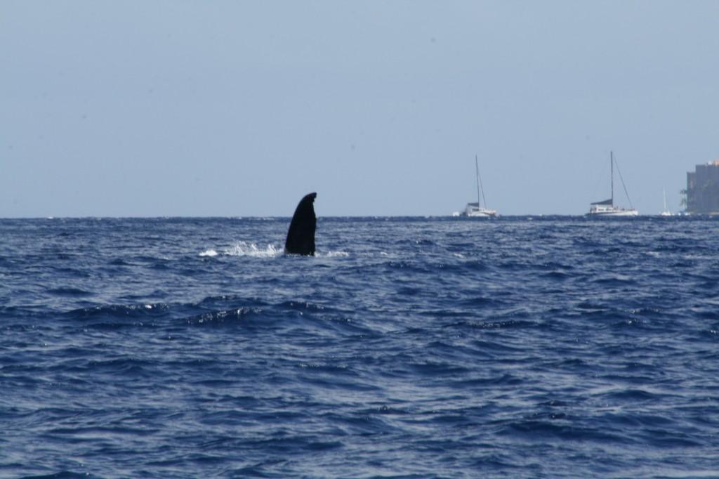waving_whale_2