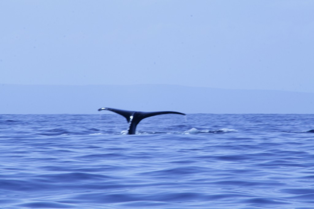 whale_tail