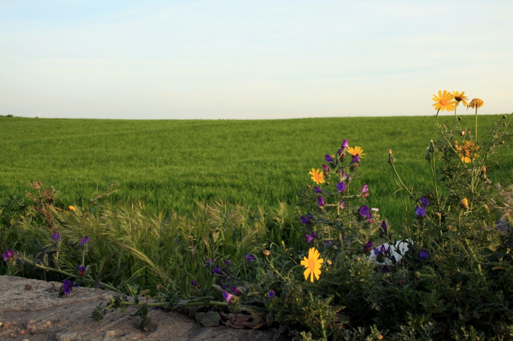 flowers-and-green-field