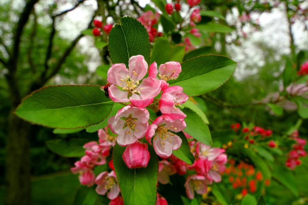 keukenhof-tree-blossom-1w