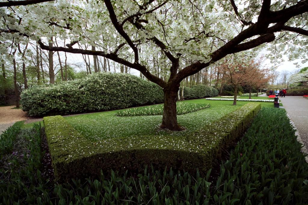 keukenhof-tree-blossom-3w
