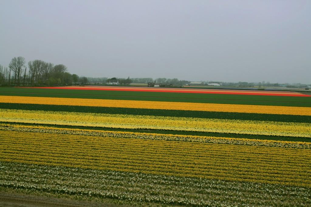 keukenhof-tulip-fields-3w
