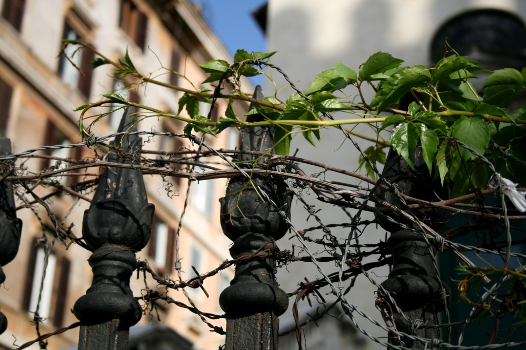 roma-barbed-wire-and-vines