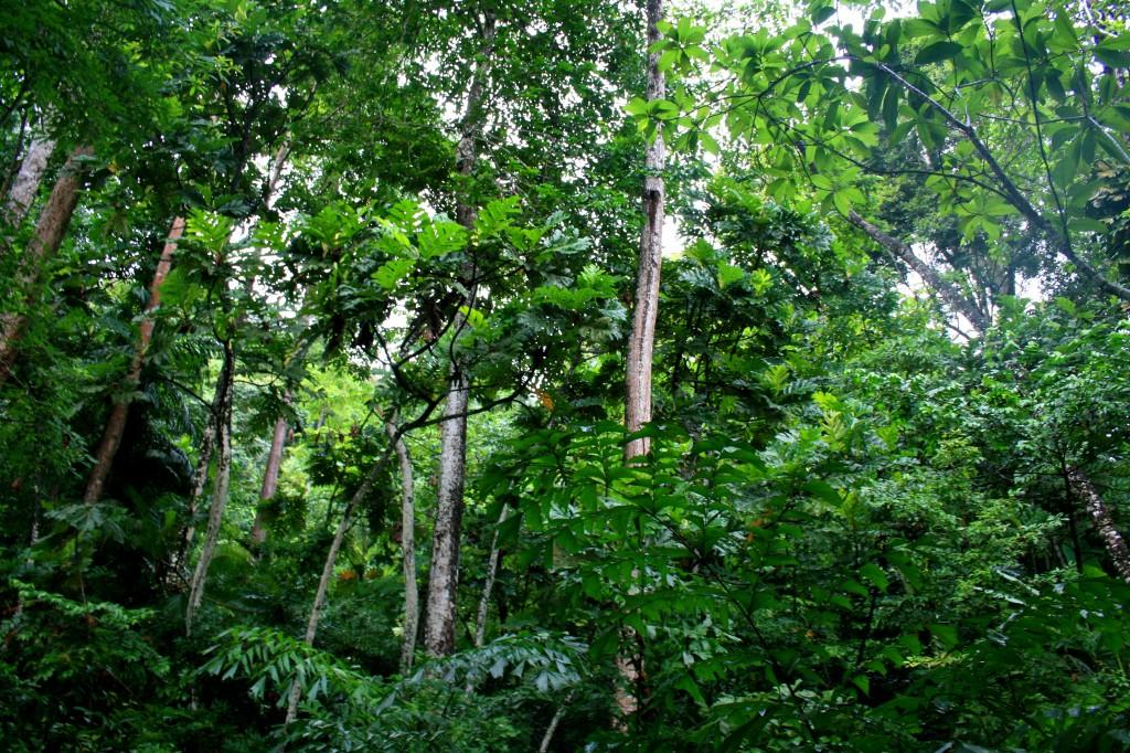 langkawi-jungle-1