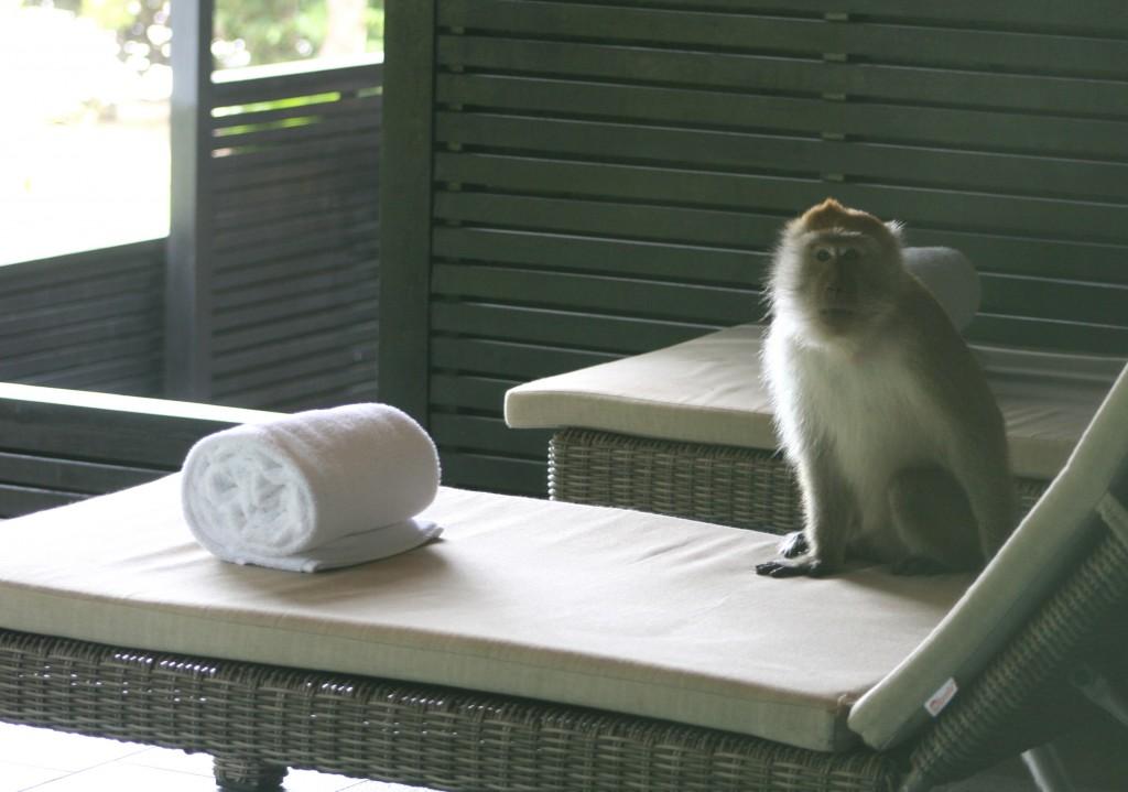 langkawi-monkey-patio