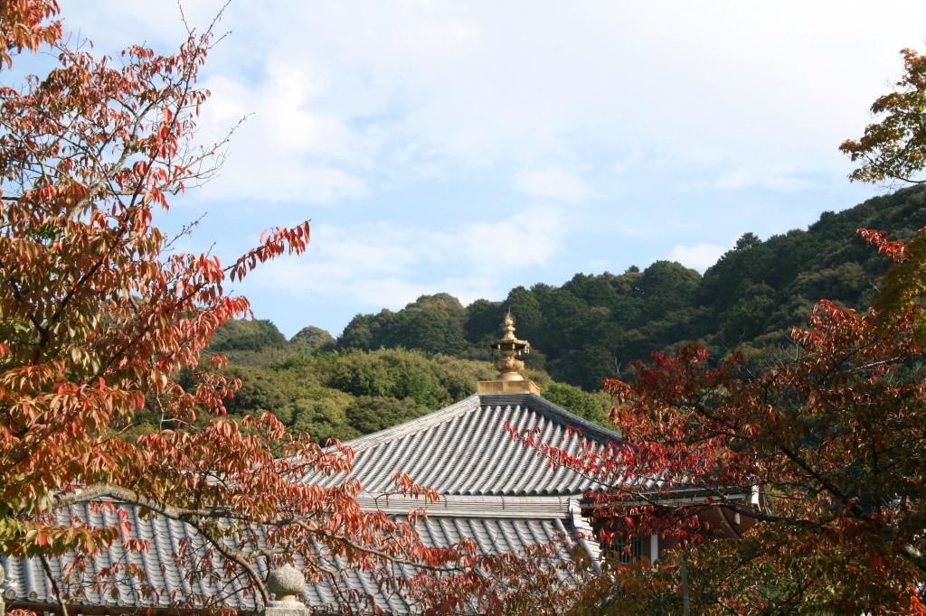kiyomizu-dera-trees-temple