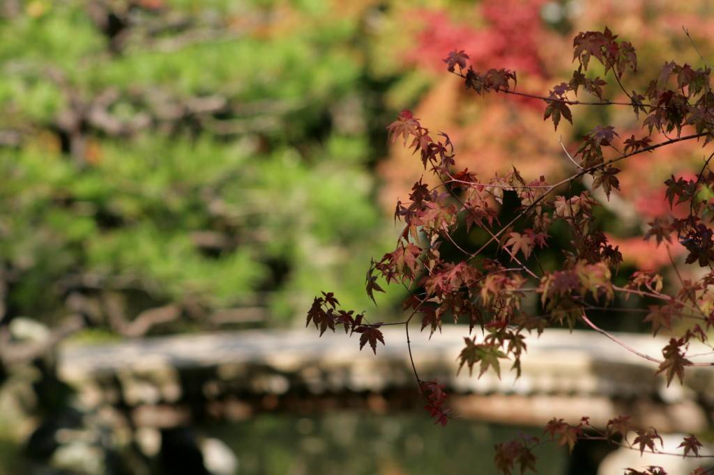 isuien-garden-maple-leaves