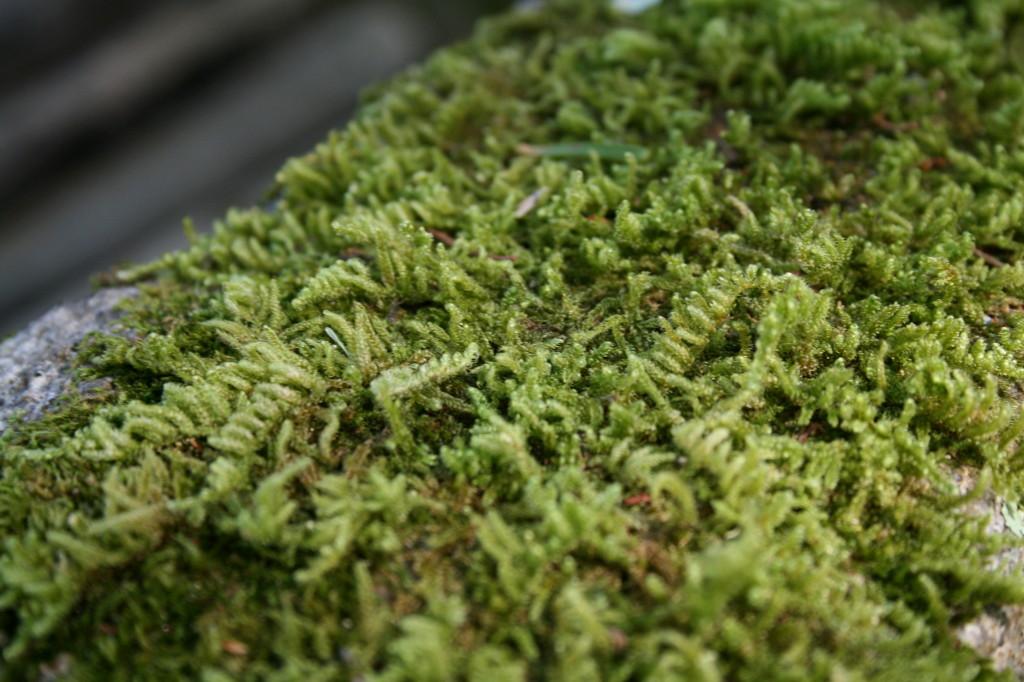isuien-garden-moss